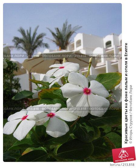 Красивые цветы на фоне пальм и отеля в Египте, фото № 213818, снято 17 ноября 2007 г. (c) Игорь Струков / Фотобанк Лори