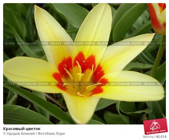 Красивый цветок, фото № 40614, снято 18 апреля 2007 г. (c) Удодов Алексей / Фотобанк Лори