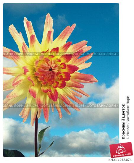 Купить «Красивый цветок», фото № 218074, снято 19 апреля 2018 г. (c) ElenArt / Фотобанк Лори