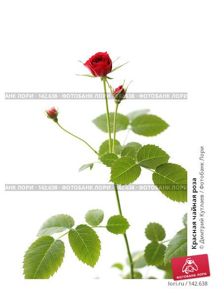 Купить «Красная чайная роза», фото № 142638, снято 24 декабря 2006 г. (c) Дмитрий Кутлаев / Фотобанк Лори