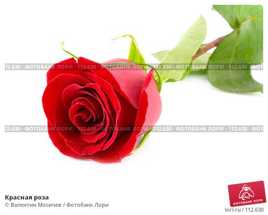 Красная роза, фото № 112630, снято 10 февраля 2007 г. (c) Валентин Мосичев / Фотобанк Лори