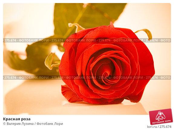 Красная роза, фото № 275674, снято 28 августа 2007 г. (c) Валерия Потапова / Фотобанк Лори