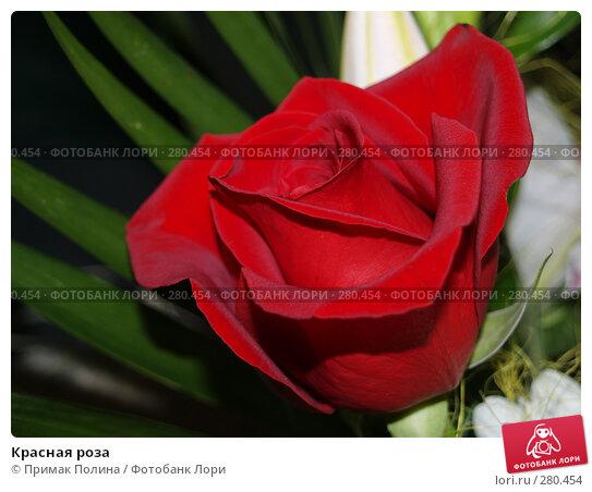 Красная роза, фото № 280454, снято 23 сентября 2007 г. (c) Примак Полина / Фотобанк Лори