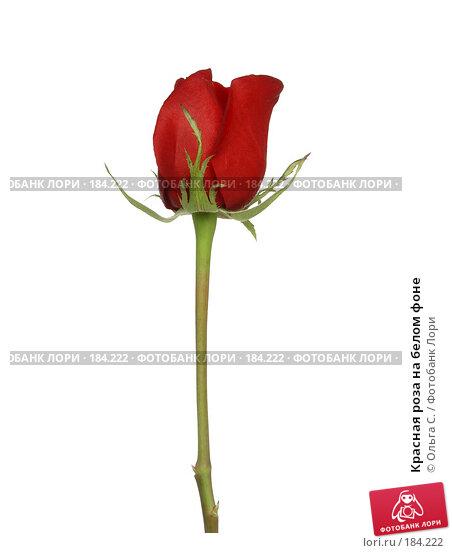 Красная роза на белом фоне, фото № 184222, снято 26 июля 2005 г. (c) Ольга С. / Фотобанк Лори