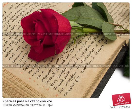 Красная роза на старой книге, фото № 205610, снято 8 февраля 2008 г. (c) Яков Филимонов / Фотобанк Лори