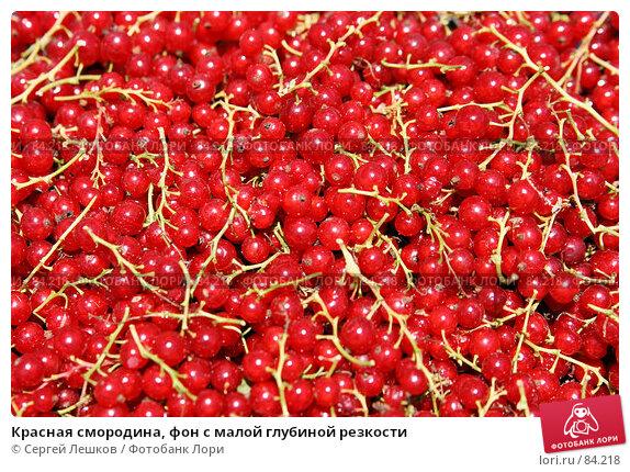 Красная смородина, фон с малой глубиной резкости, фото № 84218, снято 22 июля 2007 г. (c) Сергей Лешков / Фотобанк Лори