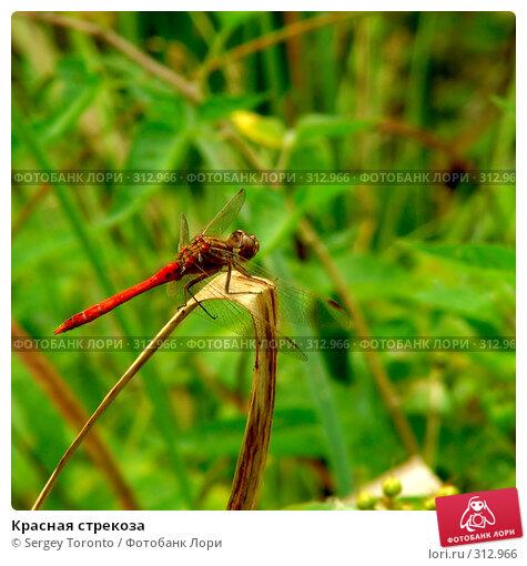 Красная стрекоза, фото № 312966, снято 13 февраля 2005 г. (c) Sergey Toronto / Фотобанк Лори