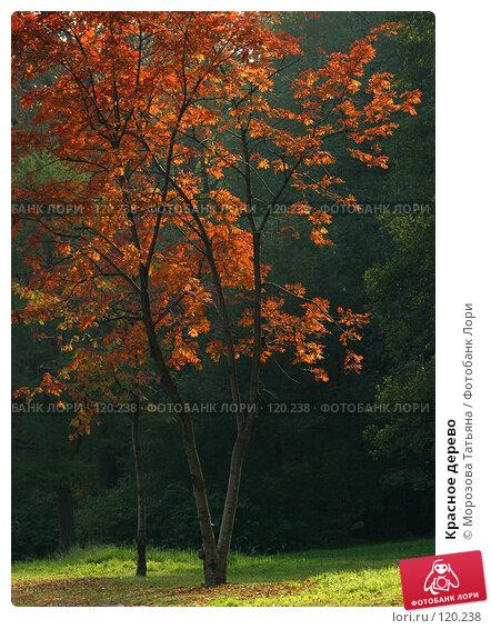 Красное дерево, фото № 120238, снято 3 октября 2005 г. (c) Морозова Татьяна / Фотобанк Лори