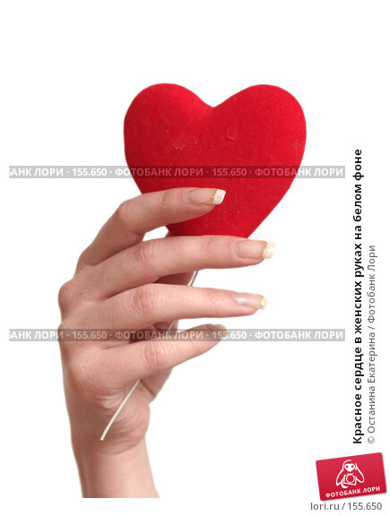 Купить «Красное сердце в женских руках на белом фоне», фото № 155650, снято 5 декабря 2007 г. (c) Останина Екатерина / Фотобанк Лори