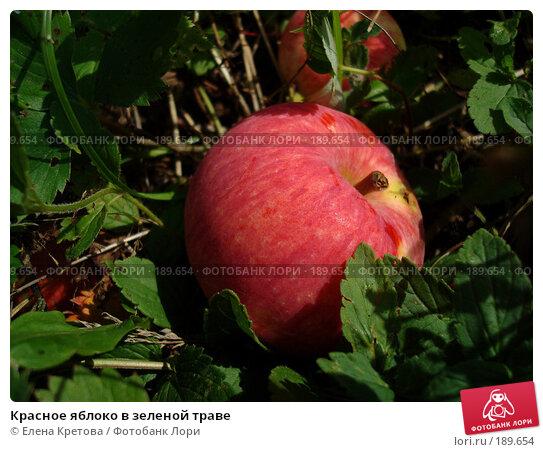 Купить «Красное яблоко в зеленой траве», фото № 189654, снято 19 февраля 2007 г. (c) Елена Кретова / Фотобанк Лори