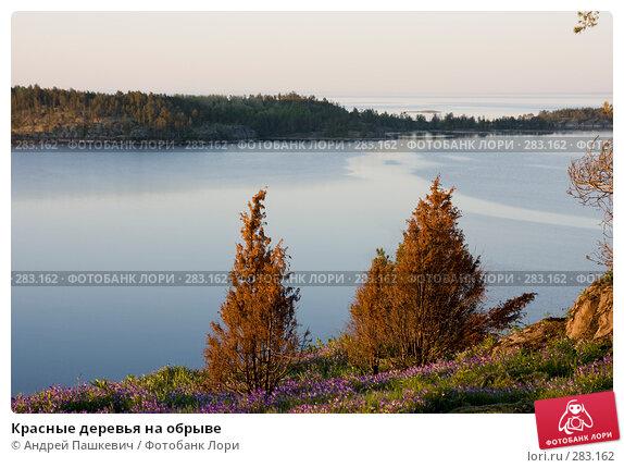 Красные деревья на обрыве, фото № 283162, снято 3 июня 2007 г. (c) Андрей Пашкевич / Фотобанк Лори