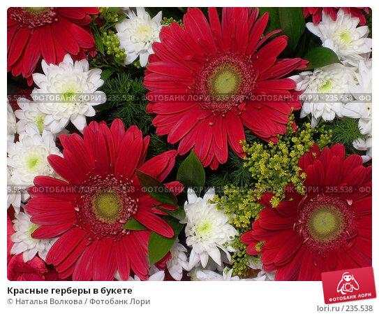 Купить «Красные герберы в букете», фото № 235538, снято 28 марта 2008 г. (c) Наталья Волкова / Фотобанк Лори