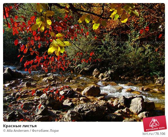 Красные листья, фото № 78106, снято 27 октября 2006 г. (c) Alla Andersen / Фотобанк Лори