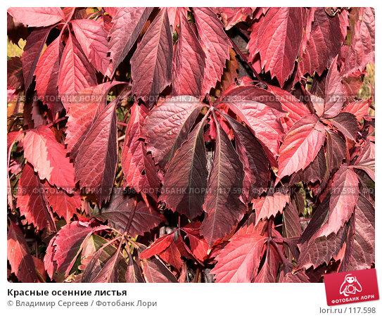 Красные осенние листья, фото № 117598, снято 30 сентября 2007 г. (c) Владимир Сергеев / Фотобанк Лори