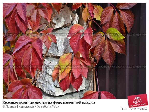 Купить «Красные осенние листья на фоне каменной кладки», фото № 32017094, снято 13 октября 2018 г. (c) Лариса Вишневская / Фотобанк Лори