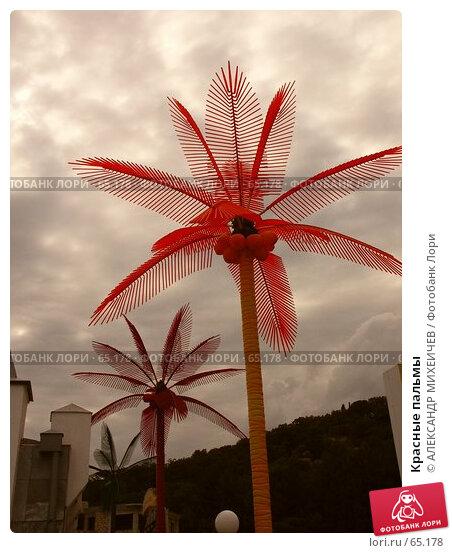 Купить «Красные пальмы», фото № 65178, снято 17 июля 2006 г. (c) АЛЕКСАНДР МИХЕИЧЕВ / Фотобанк Лори