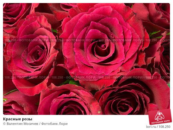 Красные розы, фото № 108250, снято 31 марта 2007 г. (c) Валентин Мосичев / Фотобанк Лори