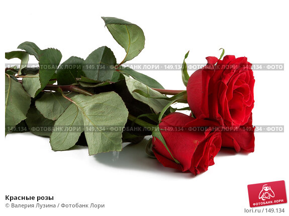 Красные розы, фото № 149134, снято 16 ноября 2007 г. (c) Валерия Потапова / Фотобанк Лори