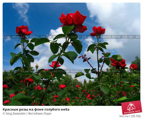 Красные розы на фоне голубого неба, фото № 135102, снято 28 июня 2005 г. (c) Serg Zastavkin / Фотобанк Лори