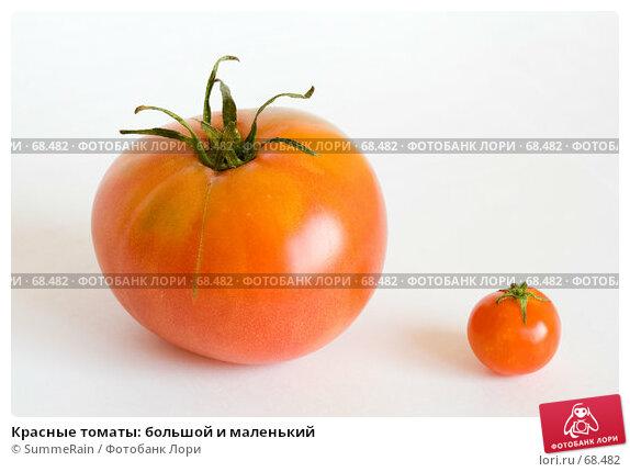 Купить «Красные томаты: большой и маленький», фото № 68482, снято 23 марта 2018 г. (c) SummeRain / Фотобанк Лори