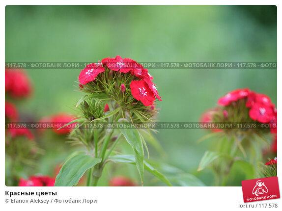 Красные цветы, фото № 117578, снято 21 июня 2006 г. (c) Efanov Aleksey / Фотобанк Лори
