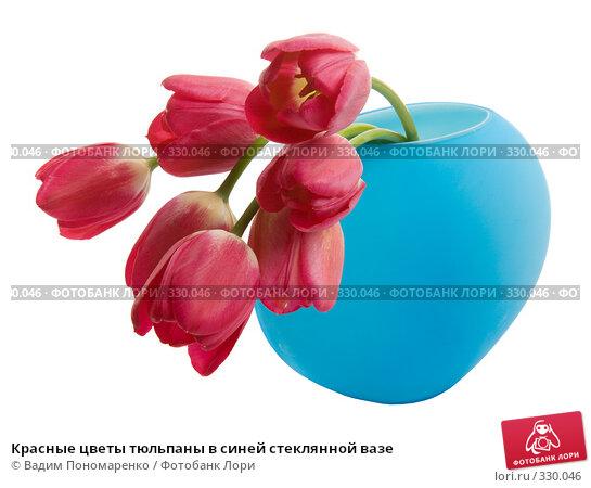Красные цветы тюльпаны в синей стеклянной вазе, фото № 330046, снято 27 мая 2008 г. (c) Вадим Пономаренко / Фотобанк Лори