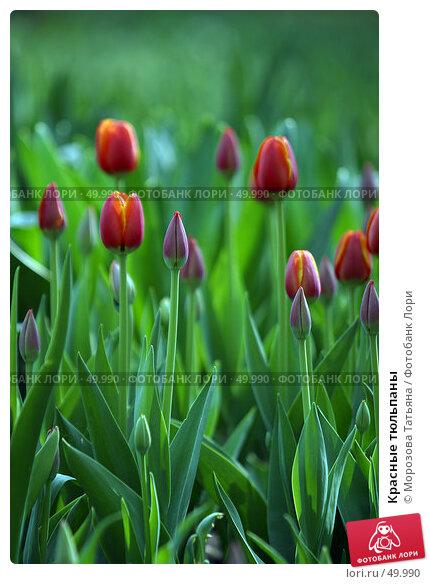 Красные тюльпаны, фото № 49990, снято 7 мая 2006 г. (c) Морозова Татьяна / Фотобанк Лори