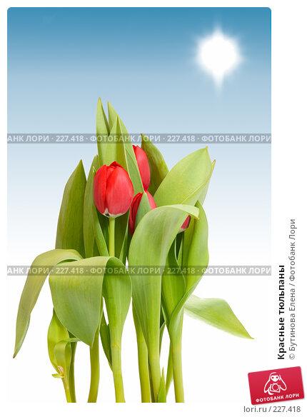 Красные тюльпаны, фото № 227418, снято 17 марта 2008 г. (c) Бутинова Елена / Фотобанк Лори