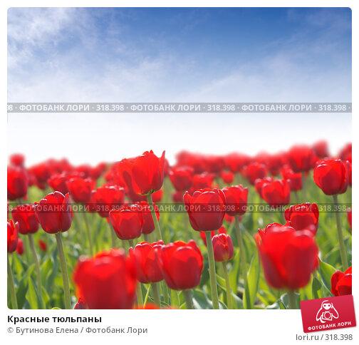 Красные тюльпаны, фото № 318398, снято 20 мая 2007 г. (c) Бутинова Елена / Фотобанк Лори