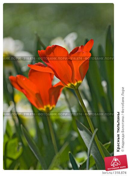 Красные тюльпаны, фото № 318874, снято 24 апреля 2008 г. (c) Надежда Болотина / Фотобанк Лори
