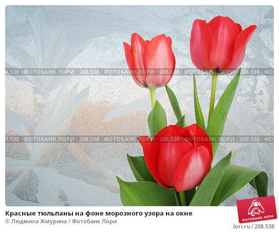 Красные тюльпаны на фоне морозного узора на окне, фото № 208538, снято 27 мая 2017 г. (c) Людмила Жмурина / Фотобанк Лори