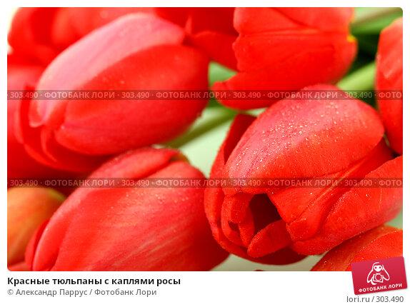 Красные тюльпаны с каплями росы, фото № 303490, снято 21 апреля 2008 г. (c) Александр Паррус / Фотобанк Лори