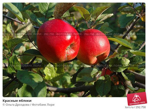 Красные яблоки, фото № 292758, снято 30 сентября 2005 г. (c) Ольга Дроздова / Фотобанк Лори