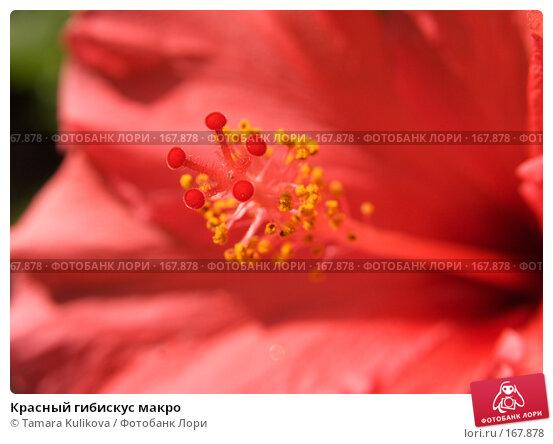 Красный гибискус макро, фото № 167878, снято 4 января 2008 г. (c) Tamara Kulikova / Фотобанк Лори