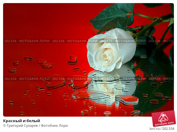 Красный и белый, фото № 202534, снято 27 ноября 2006 г. (c) Григорий Сухарев / Фотобанк Лори