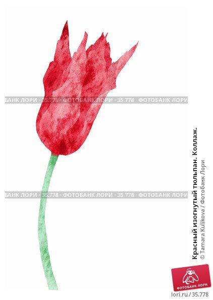Красный изогнутый тюльпан. Коллаж., иллюстрация № 35778 (c) Tamara Kulikova / Фотобанк Лори