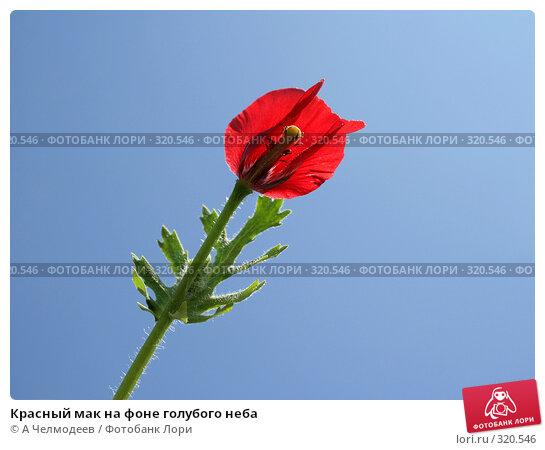 Красный мак на фоне голубого неба, фото № 320546, снято 15 мая 2008 г. (c) A Челмодеев / Фотобанк Лори