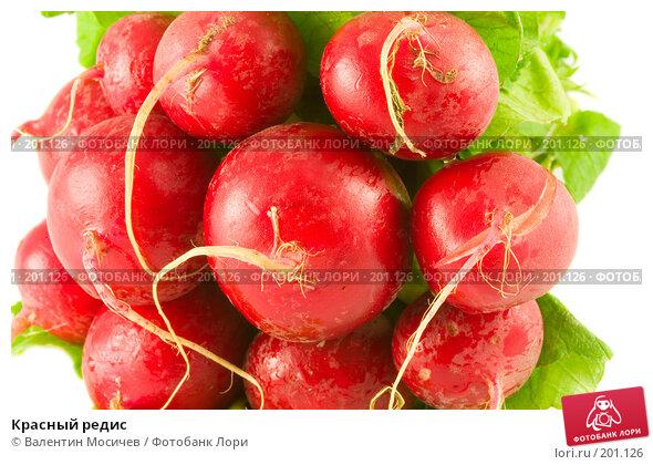 Красный редис, фото № 201126, снято 14 октября 2007 г. (c) Валентин Мосичев / Фотобанк Лори