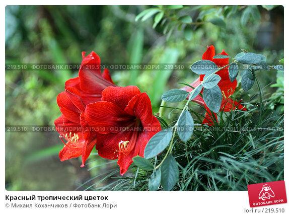 Красный тропический цветок, фото № 219510, снято 1 марта 2008 г. (c) Михаил Коханчиков / Фотобанк Лори