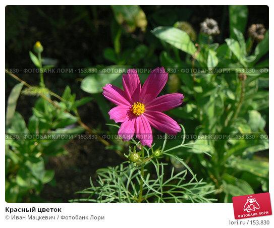 Красный цветок, фото № 153830, снято 7 сентября 2007 г. (c) Иван Мацкевич / Фотобанк Лори