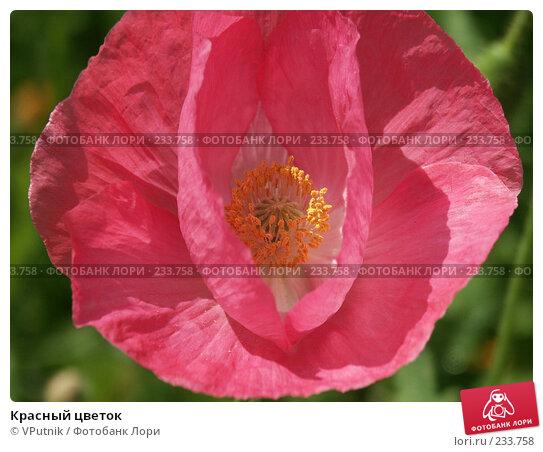 Красный цветок, фото № 233758, снято 25 июля 2004 г. (c) VPutnik / Фотобанк Лори