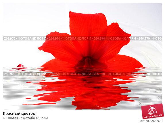 Красный цветок, фото № 266970, снято 27 мая 2017 г. (c) Ольга С. / Фотобанк Лори