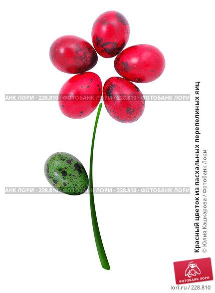 Купить «Красный цветок из пасхальных перепелиных яиц», фото № 228810, снято 15 марта 2008 г. (c) Юлия Кашкарова / Фотобанк Лори