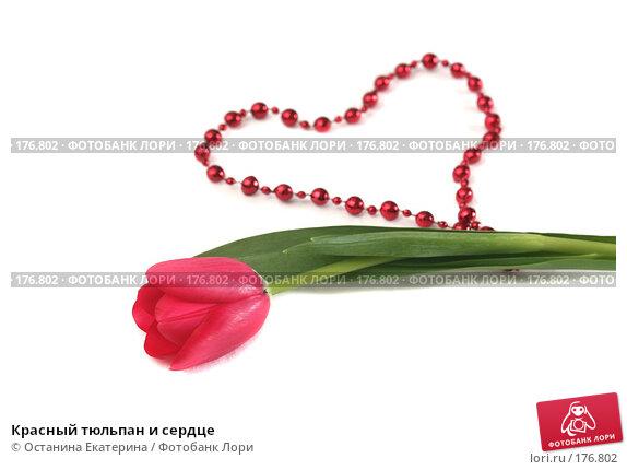 Красный тюльпан и сердце, фото № 176802, снято 15 января 2008 г. (c) Останина Екатерина / Фотобанк Лори