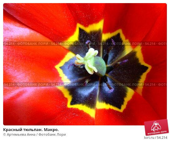 Красный тюльпан. Макро., фото № 54214, снято 8 февраля 2006 г. (c) Артемьева Анна / Фотобанк Лори