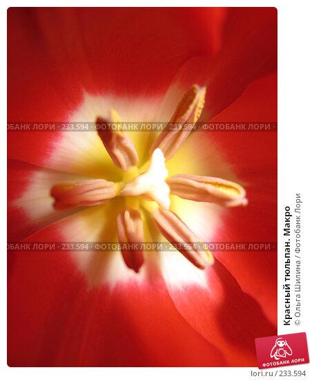 Красный тюльпан. Макро, фото № 233594, снято 25 сентября 2017 г. (c) Ольга Шилина / Фотобанк Лори