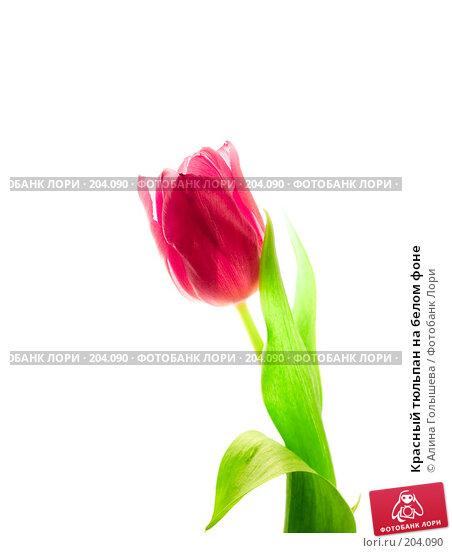 Красный тюльпан на белом фоне, эксклюзивное фото № 204090, снято 17 февраля 2008 г. (c) Алина Голышева / Фотобанк Лори