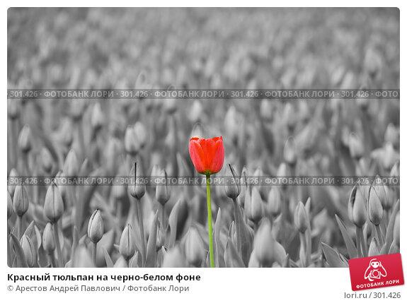 Купить «Красный тюльпан на черно-белом фоне», фото № 301426, снято 11 апреля 2008 г. (c) Арестов Андрей Павлович / Фотобанк Лори