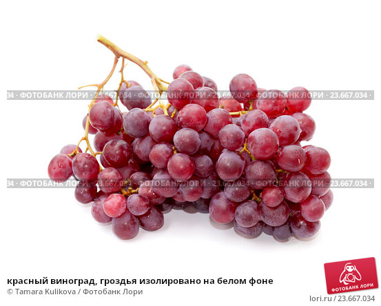 Купить «красный виноград, гроздья изолировано на белом фоне», фото № 23667034, снято 28 сентября 2016 г. (c) Tamara Kulikova / Фотобанк Лори
