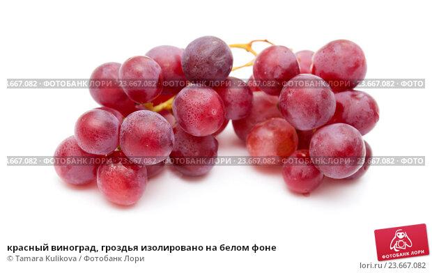 Купить «красный виноград, гроздья изолировано на белом фоне», фото № 23667082, снято 28 сентября 2016 г. (c) Tamara Kulikova / Фотобанк Лори